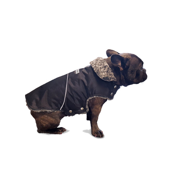 Mighty dog stretch jacket on french bulldog model my canine kids cloak and dawggie