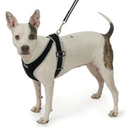 My Canine Kids | Cloak and Dawggie  - Dog Harness, Vest