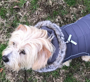 cute dog wearing gray apres ski jacket