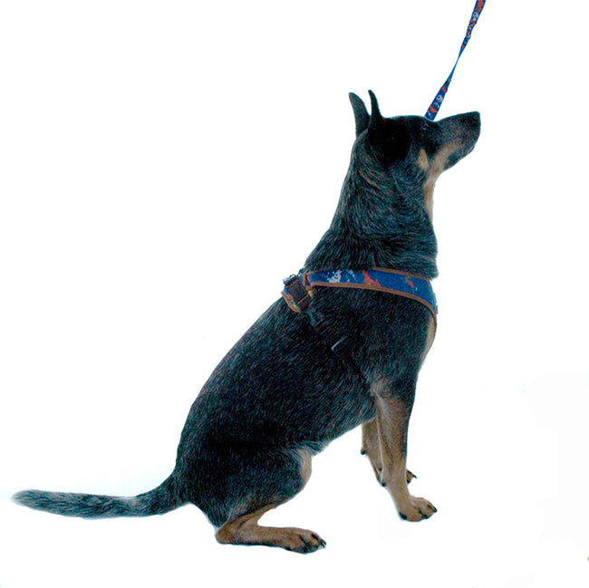 Dog wearing denim splash print dog harness 4500 cloak and dawggie