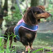 cloak and dawggie denim harness 4900 dachshund wearing harness