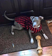 pitbull mix wearing red plain fleece sweater