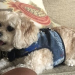 4600 Denim Lace Dog Harness Vest Up to 15 LBS