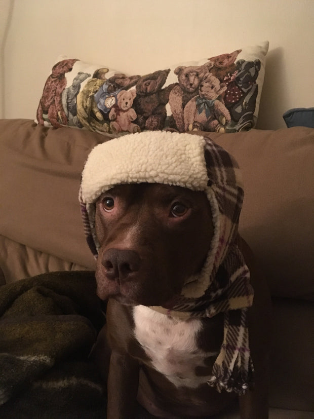Anerican Staffordshire terrier wearing hat and scarf set