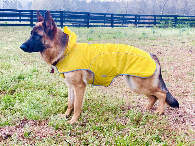 Yellow dog raincoat on german shepherd cloak and dawggie my canine kids