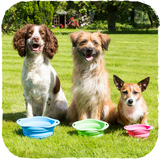 Beco Travel Bowl | Pisces Pets