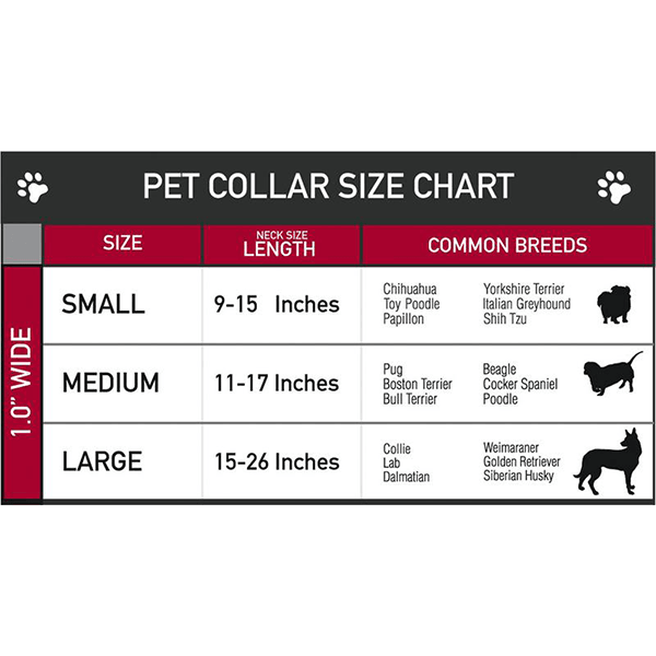 Buckle-Down Small Spiderman Collar | Pisces Pets
