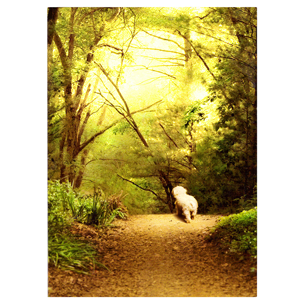 Avanti Dog On Path Pet Sympathy Card | Pisces Pets