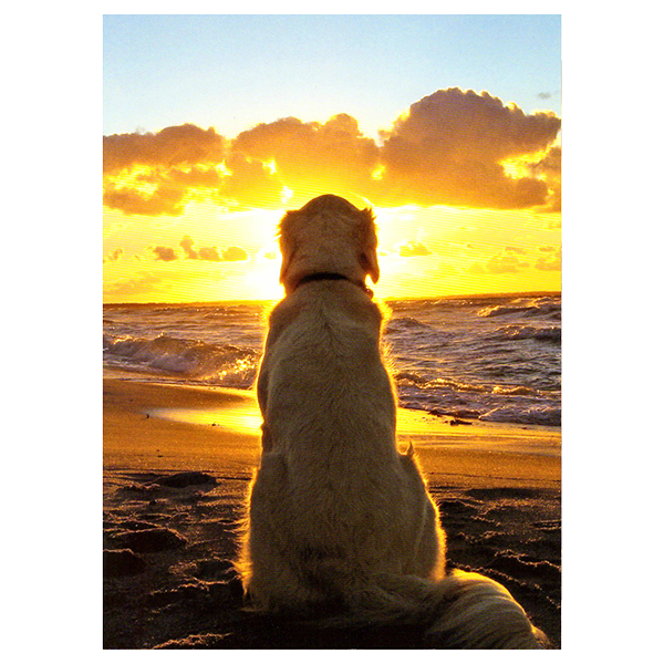 Avanti Dog Sitting On Beach At Sunset Sympathy Card | Pisces Pets