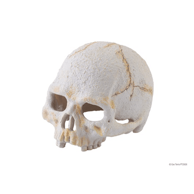 Exo terra Primate Skull Hide - Small | Pisces Pets