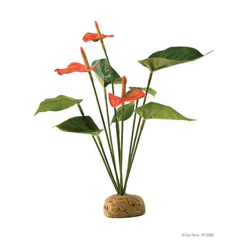 Exo Terra Rainforest Plant - Anthurium Bush | Pisces Pets