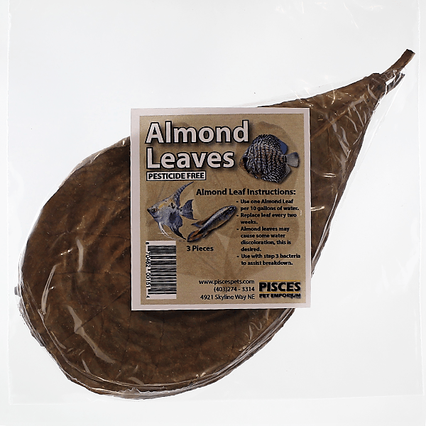 Pisces Almond Leaves - Large | Pisces Pets