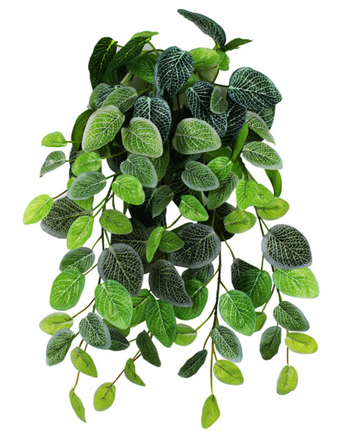 Pangea Hanging Bush - Fittonia 18""