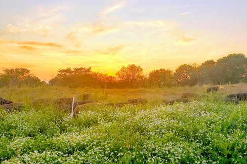 The Sun and Regenerative Farming