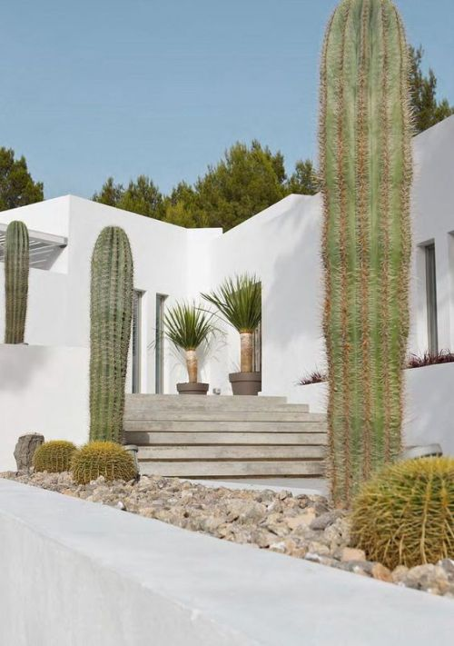 Currently Obsessing: Cacti Gardens