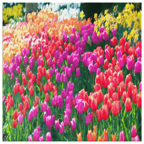 teelaunch Canvas Wall Art 3 8 x 8 Tulips in Full Bloom Portrait - Canvas Wall Art
