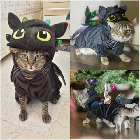 Pet Dragon Costume
