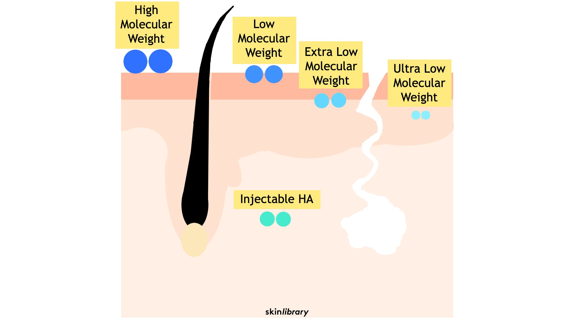 Hyaluronic Acid and molecular weight
