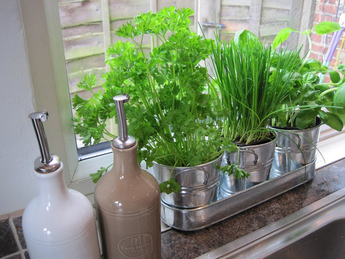 Grow Your Own Kitchen Plants