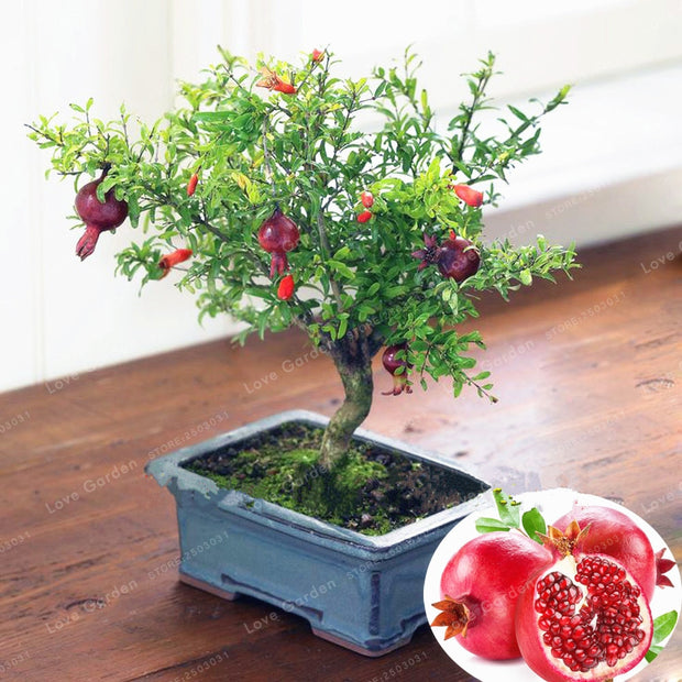 20 Pcs/ Bag Bonsai Pomegranate Bonsai Very Sweet Delicious Fruit Bonsai Succulents Tree Bonsai Plant For Home Garden Pot