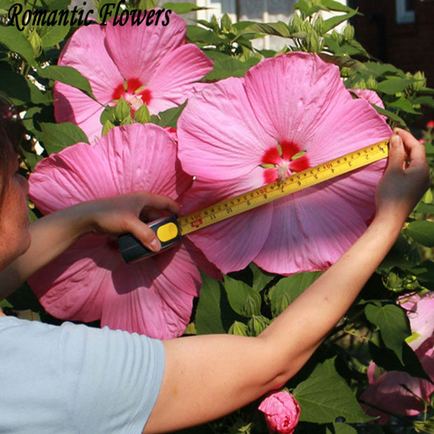 50 Particle/bag Giant Hibiscus Flower Seeds Hardy ,Mix Color, DIY Home Garden Potted Or Yard Flower Plant Free Shipping