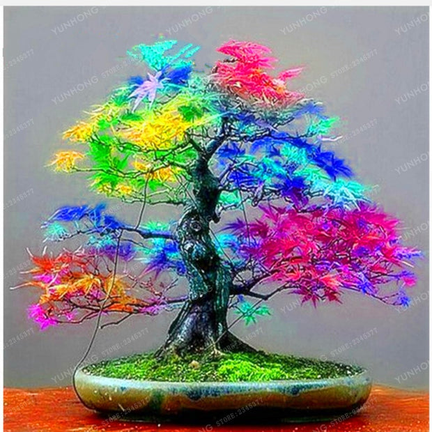 20 Pcs Rare Blue Maple plant Bonsai Tree Plants Pot Suit for DIY Home Garden Japanese Beautiful Multicolor Maple bonsai