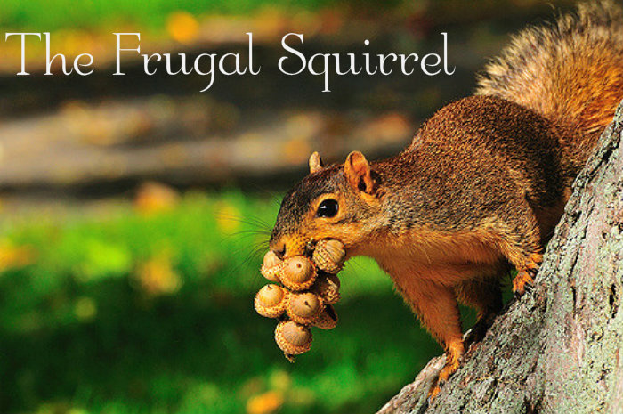 The Frugal Squirrel