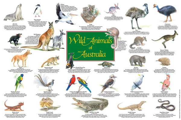 Wild Animals of Australia Limited reproduction poster