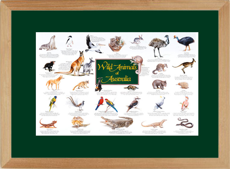 Wild Animals of Australia Limited reproduction poster - FRAMED