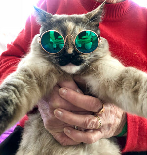 Sunglasses for Small Dogs and Cats