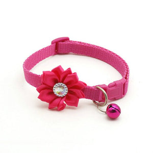 Dog Collar fit small dogs adjustable