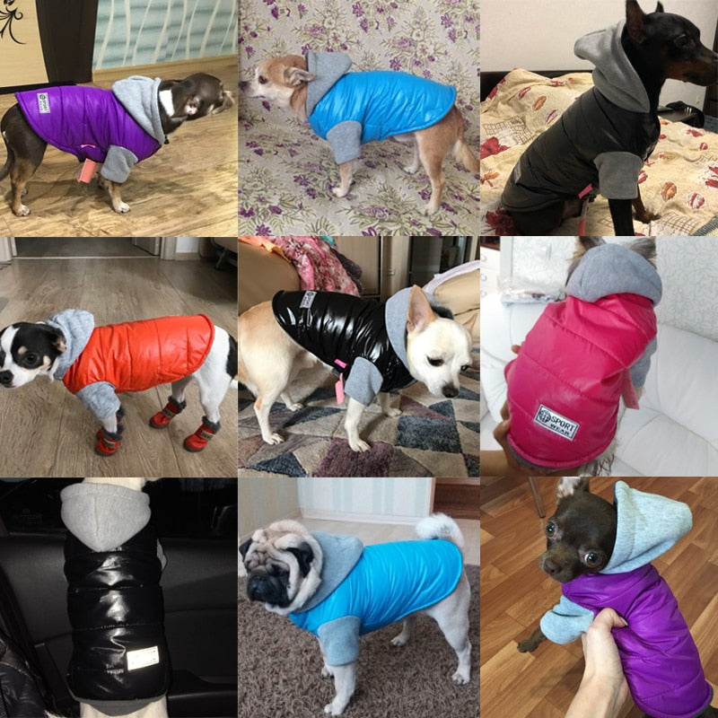Coat For Small Dogs