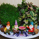 "Miniature Gardening Gnomes Set of 4 pcs, 3,1""-3,7"" Height Figurines & Accessories, Kit for Outdoor or House Decor, By Mood Lab"