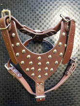 Brown Studded Harness