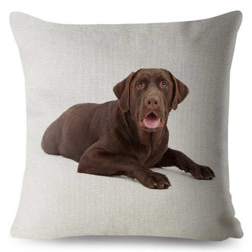 Pillow(HD014) Chocolate Lab