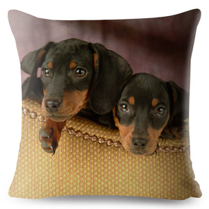 Pillow(HD020) Adorable Miniature Dachshund Take 2