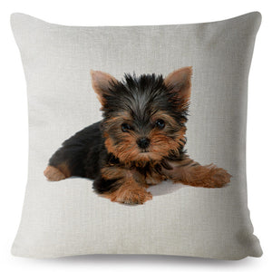 Pillow(HD025) Baby Yorkie