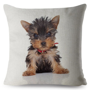 Pillow(HD030) Yorkshire Terrier Puppy