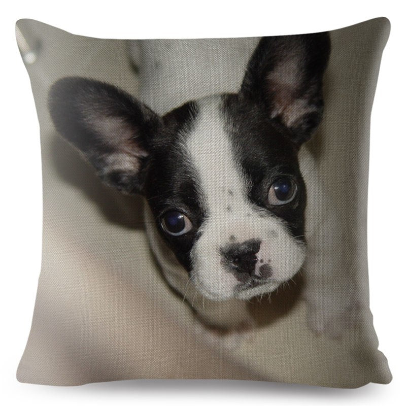 Pillow(HD035) French Bulldog/ Frenchton
