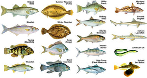 Common Fish Species For Saltwater Lure Fishing