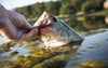 The 7 Reasons Of Running Fish During the Bass Fishing
