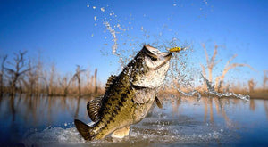 Ten Entry Skills for Lure Fishing Baits