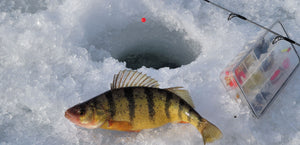The Basic Ice Fishing Gear for Beginners