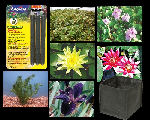 Popular collection of Pond Plants