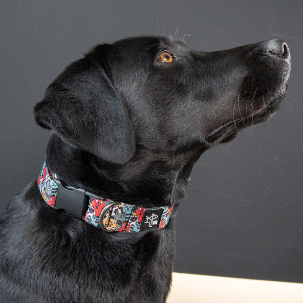 Daily Collar -  Dogs & Cats