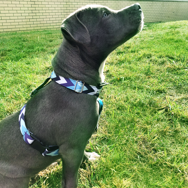 Daily Harness - Blue Stripes
