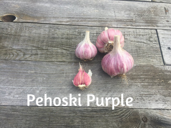 Pehoski Purple Garlic