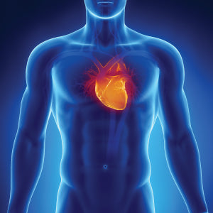 Essentials of Cardiovascular Health