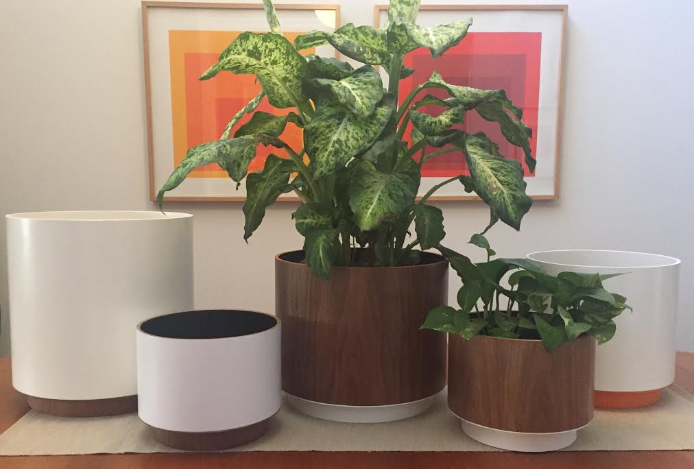 Everything that you need to know about Mid-Century Planters