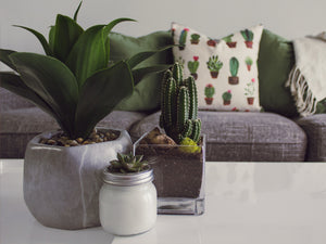 In Time for Earth Day: How To Make Your Home Décor Earth-Friendly